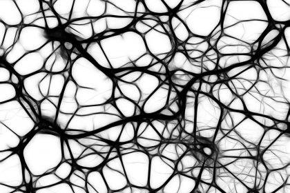 Neuromarketing | Maria Ngo & Ray DuGray | AuthorityShowcase.com